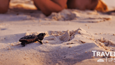 Live the release of sea turtles at Crown Paradise Cancun
